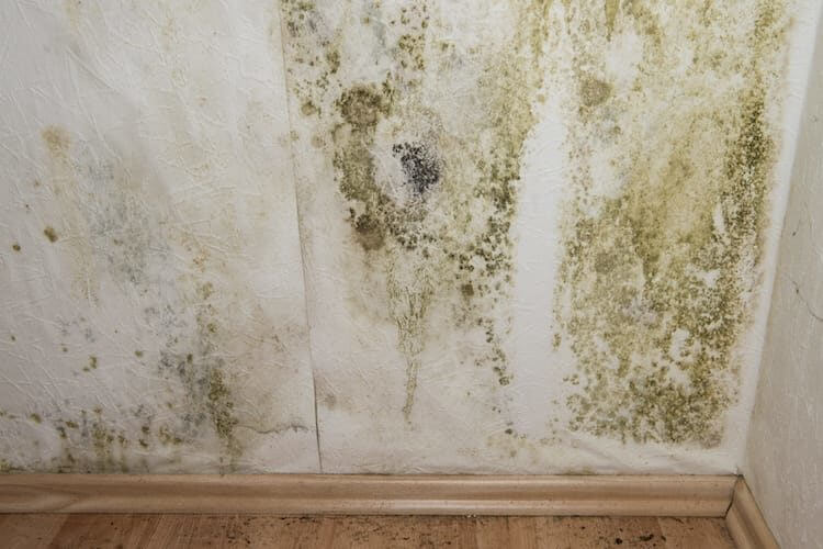 Finding Mold in a Home: What to Do if an Inspector Finds Mold