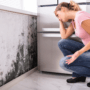 What You Need to Know About Mold